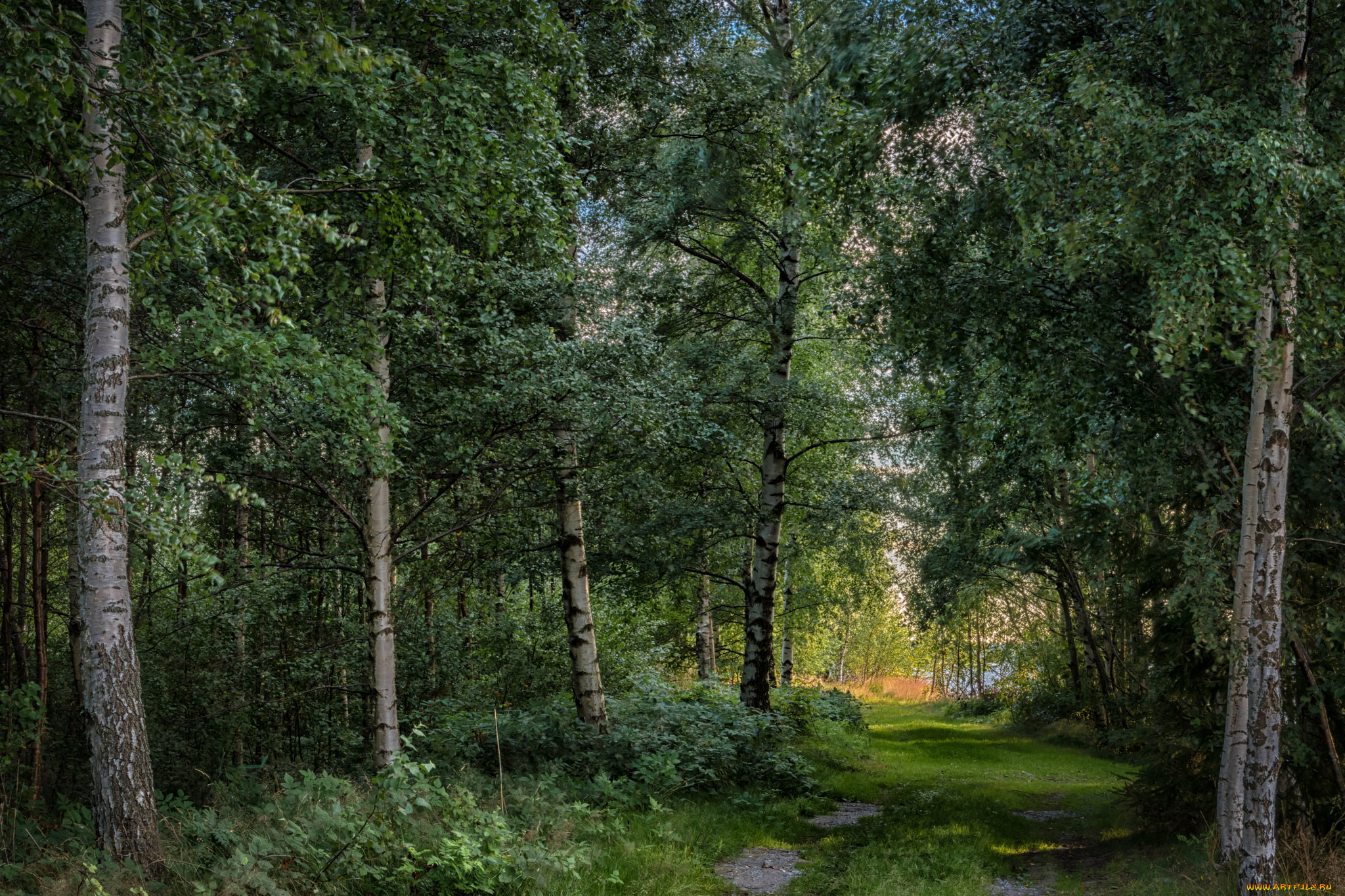 картинки лесные просторы название слышал каждый